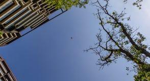 Hommel die in de hemel vliegen stock afbeelding
