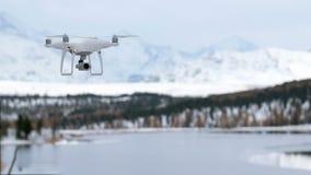 Hommel die in de winter vliegen stock footage