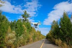 Hommel die in het bos vliegen Stock Foto