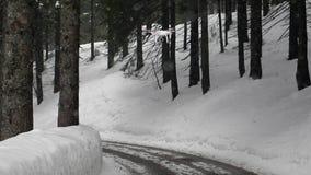 Hommel die in het de winterbos vliegen stock video