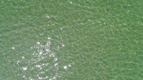 Hommel die mooie zeewateroppervlakte vliegen stock footage