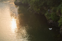 Hommel die over rivier vliegen Stock Fotografie