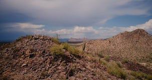 Hommel die rond grote steenheuvel met eenzame cactus op bovenkant in verbazende stormachtige woestijn bij nationale het parkreser stock videobeelden