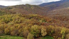 Hommel gebiedsmening van de theeaanplantingen in de bergen Tegen de achtergrond van een stormachtige hemel De herfst stock video