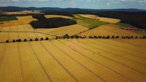 Hommel lucht landbouwgebieden stock videobeelden