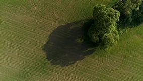 Hommel Luchtlengte van de landbouwgebieden Weinig bomen in het midden stock videobeelden