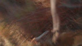 Hommel tijdens de vlucht in een berk wordt en op een boom wordt gehangen verpletterd die die stock footage
