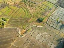 Hommel of vogel eyeview van het Padieveld van Bali stock foto's