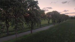 Hommelmening: het vliegen omhoog boven bomen en het openbaren van gebieden bij zonsondergang stock video
