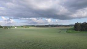 Hommelmening: het vliegen over mooie tarwegebieden in het landelijke platteland stock video