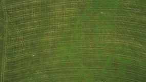 Hommelmening van weiden worden gebruikt om gras voor dieren te snijden dat stock afbeelding