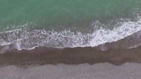 Hommelmening van zeekust stock video