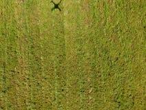 Hommelschaduw op het gras Stock Afbeeldingen