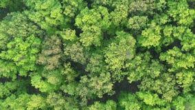 Hommelvlucht boven boskampvuur en het dichte gebladerte van de de lenteboom, 4K stock video