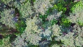 Hommelvlucht over een groen bos stock footage