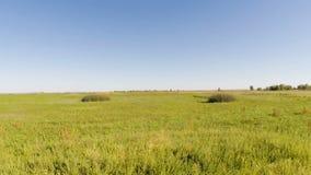 Hommelvlucht over grasgebied met blauwe hemel stock videobeelden