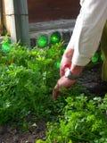 Hommes coupant des herbes Image libre de droits