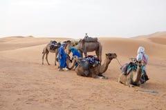 Hommes de Berber avec des chameaux photo libre de droits