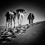 2 hommes et 2 chameaux dans le désert du Sahara Images stock