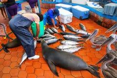 Hommes locaux coupant des poissons au marché dans Puerto Ayora sur Santa Cr image stock