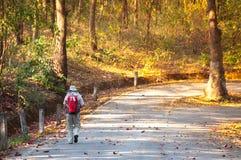 Hommes marchant avec des sacs à dos pendant la saison d'automne de forêt de l'Asie du dos image stock