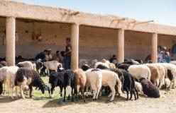 Hommes marocains attendant des clients au marché de moutons, Maroc photos stock