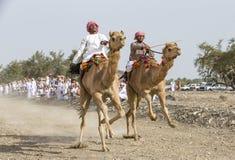 Hommes omanais emballant des chameaux sur la route poussiéreuse de campagne image libre de droits