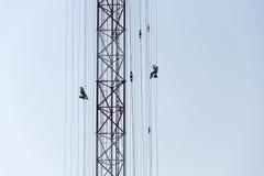 Hommes peignant la plus haute tour tchèque Liblice d'émetteur radioélectrique de construction Photos stock