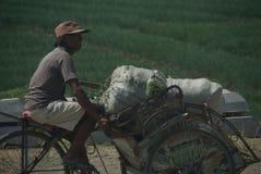 Hommes sur un vélo avec champs verts comme fond image stock
