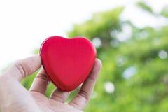 Hommes tenant la couleur rouge de boîte en forme de coeur sur le fond blury d'arbre utilisant le papier peint ou le fond pour la  photo stock