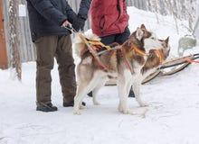 Hommes tenant les chiens enroués en hiver Photos stock