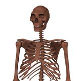 homo erectus Στοκ φωτογραφία με δικαίωμα ελεύθερης χρήσης