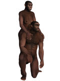 Homo Erectus Royalty Free Stock Image