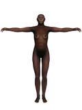 Homo Erectus Stock Image
