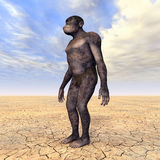 Homo Habilis - Human Evolution Royalty Free Stock Photo