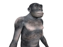 Homo Habilis - Human Evolution Royalty Free Stock Photos