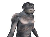 Homo Habilis - Menselijke Evolutie vector illustratie