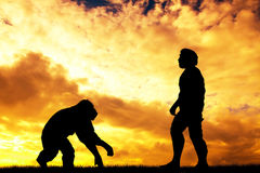 Homo sapiens Royalty Free Stock Photography