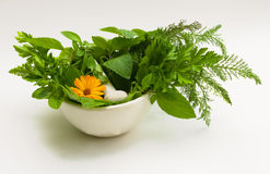 Homoeopathic motives. The Image of medicinal grasses and flowers Stock Photography