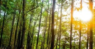 Homogen-Wald Stockbild