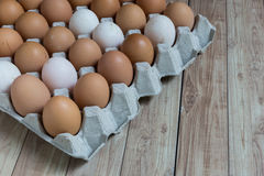 Homogeneous concept : Different kinds of eggs stay together homo Stock Image
