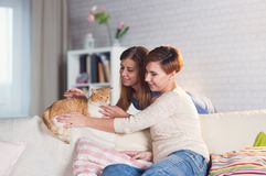 Homosexual couple of lesbian women at home on the couch. With a redheaded pet cat Stock Image