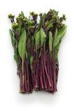 Hon tsai tai, фиолетовая choy сумма, фиолетовый мустард стержня Стоковые Фото