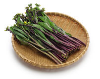 Hon tsai tai, фиолетовая choy сумма, фиолетовый мустард стержня Стоковое фото RF