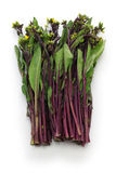 Hon tsai tai, suma choy púrpura, mostaza púrpura del tronco fotos de archivo