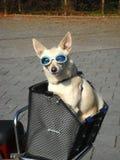 Hond 001 Royalty-vrije Stock Afbeeldingen