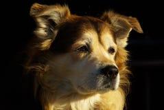 Hond 04 Royalty-vrije Stock Afbeeldingen