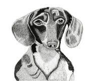 Hond 1 Royalty-vrije Stock Afbeeldingen
