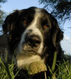 Hond 1 Royalty-vrije Stock Afbeelding