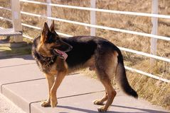 Hond Royalty-vrije Stock Fotografie